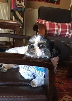 Eddie snoozing.jpg