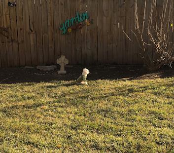 Joey in the yard.jpg