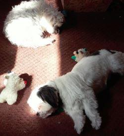 Katey and Bailey sleeping in the sun.jpg